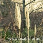 Grainy Grains