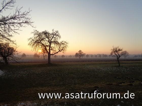 Winterlicher Sonnenuntergang auf der Apfelwiese