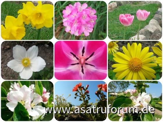 Die bunte Blütenkraft der Natur