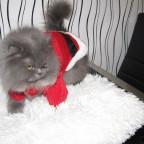 Meine Katze:D