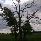 Zwiespältiger Baum [2]