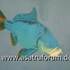 Fisch (Öl/Acryl auf Leinwand)
