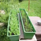 Getreide (2)