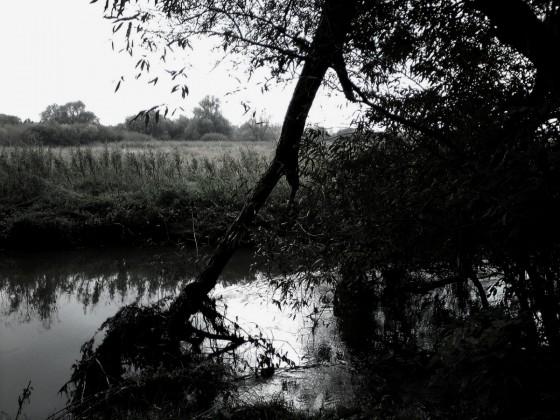 Natur III