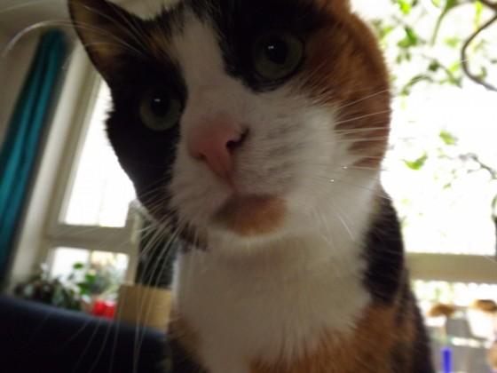 Katze(Kessie)...offensichtlich ;)