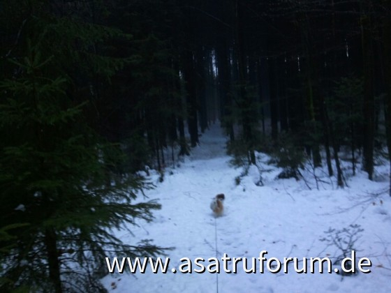 Ein kleiner Chinese furchtlos auf dem Weg in die Germanischen Wälder