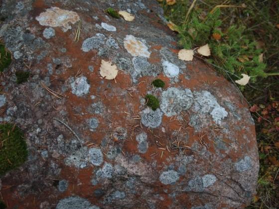 Bunte Flechten auf dem Stein