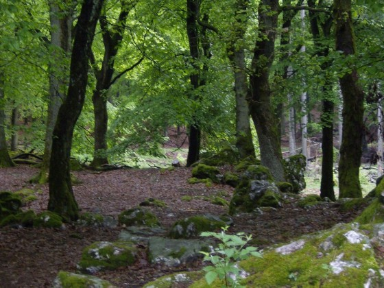 """Mein"" Wald"