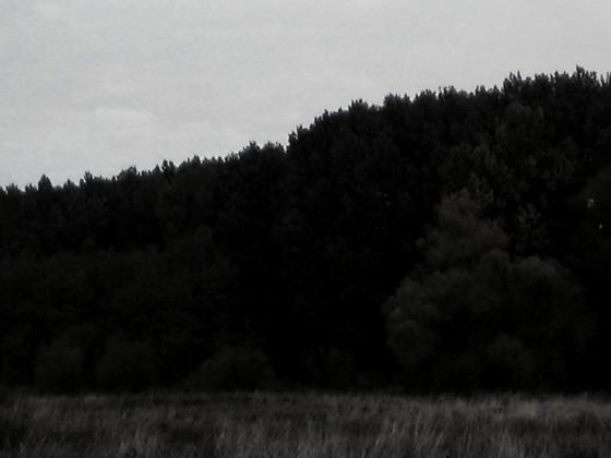 Natur II