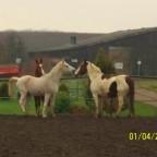 1Pferde