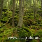 Bayerischer Wald - Höllenbachgespreng