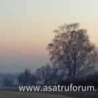 Die Sonne verschwindet hinter der Birke